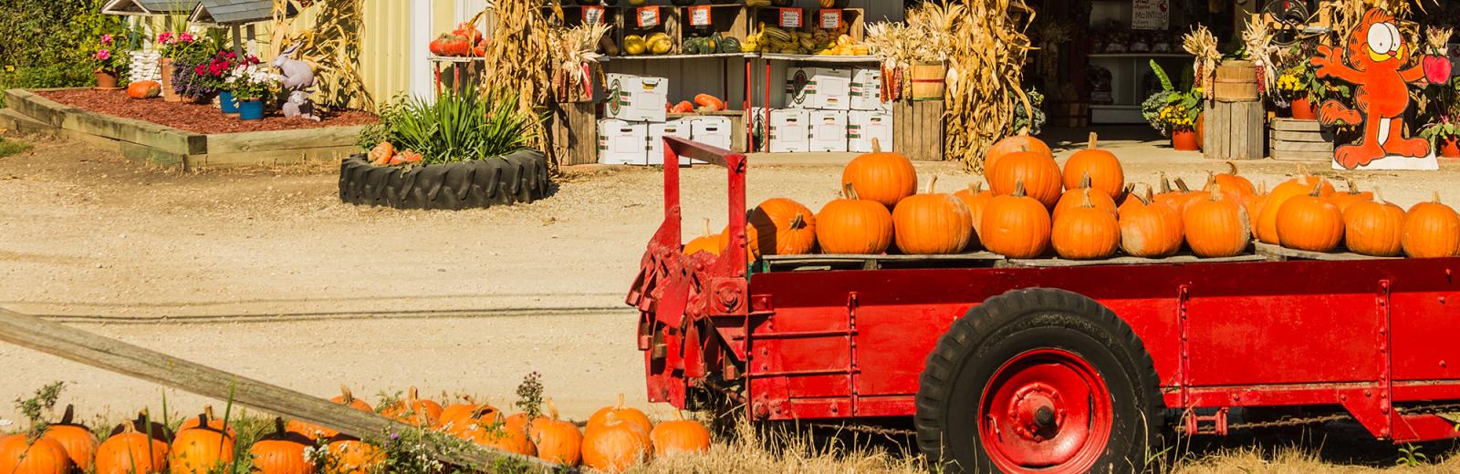nieman-markets-pumpkins