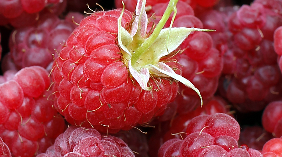 raspberries-up-close